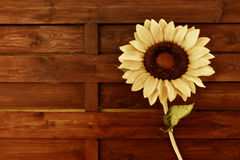 Sunflower wooden background Royalty Free Stock Image