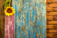 Sunflower wooden background Stock Photography