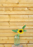 Sunflower and wooden wall Stock Photo