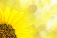 Sunflower on yellow background Stock Photo
