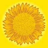 Sunflower on yellow background Royalty Free Stock Photos