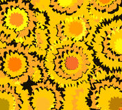 Sunflower yellow background Stock Images