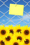 Sunflower and yellow note Stock Images