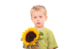 Sunflower for you Stock Image