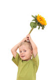 Sunflower for you royalty free stock photo