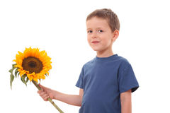 Sunflower for you stock images