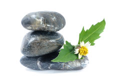 Sunflower on zen stone, spa concept Royalty Free Stock Image