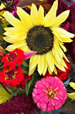 Sunflower and Zinnias in a Bouquet. Farmers' market summer bouquet of zinnias and a giant sunflower stock photography