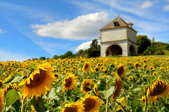 Free Sunflowers Royalty Free Stock Images - 13355889