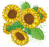 sunflowers 库存照片
