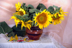 The sunflowers 2 Royalty Free Stock Image
