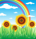 Sunflowers. Summer day in the country. sunflower and rainbow landscape Stock Image