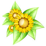 Sunflowers. In a glossy style with leaves vector illustration