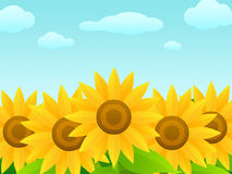 Sunflowers. An illustration of a some brightly colored sunflowers Royalty Free Stock Photo