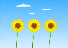 Sunflowers. Bright yellow sunflowers on grass with blue sky, sun and clouds Royalty Free Stock Photography