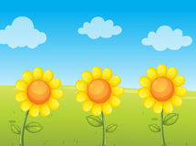 Sunflowers. Illustration of 3 sunflowers in field Stock Image