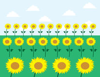 Sunflowers. In grassy field and sky background Royalty Free Stock Images