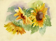 Sunflowers. Background beautiful, yellow, summer Royalty Free Stock Image