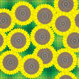Sunflowers. Pattern of sunflowers on a green plaid background Stock Photo