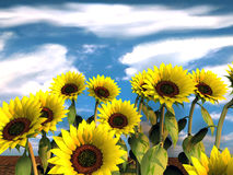 Sunflowers. Group of sunflowers and blue sky - 3d rendering Royalty Free Stock Images
