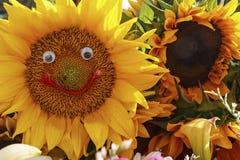 Free Sunflowers Stock Photography - 42634062