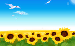 Sunflowers stock illustration