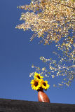 Sunflowers against blue sky. Stock Photos