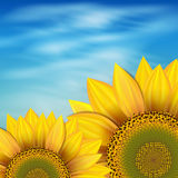 Sunflowers against the blue sky Royalty Free Stock Photo