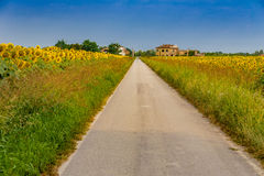 Free Sunflowers Along A Country Dirt Road Stock Images - 74702744