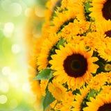 Sunflowers anc marigold flowers border Stock Photography