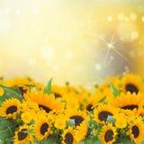 Sunflowers anc marigold flowers garden Stock Photography