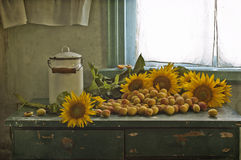 Free Sunflowers And Apricots Royalty Free Stock Image - 20274586