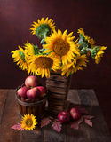 Sunflowers and apples Stock Photo