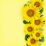 Sunflowers arrangement Stock Photography