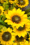 Sunflowers of artificial flowers stock images
