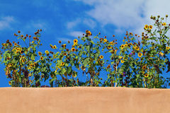 Sunflowers atop adobe building Stock Photography