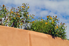 Sunflowers atop adobe building Stock Photos