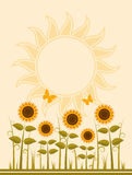 Sunflowers background Stock Photography