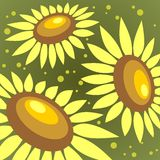 Sunflowers background Stock Images