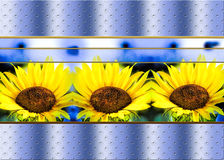 Sunflowers Background on Blue Pattern Royalty Free Stock Photography