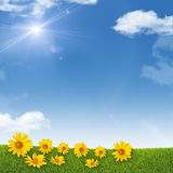 Sunflowers on background of sky, clouds, sun Stock Photos