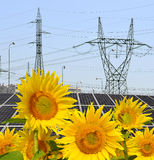 Sunflowers in the background solar panels and pylons Royalty Free Stock Images