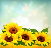 Sunflowers Background With Sunflower And Leaves. Vector Stock Photography