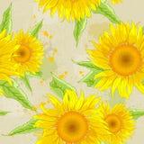 Sunflowers background Royalty Free Stock Photos