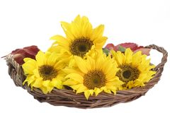 Sunflowers in a Basket Royalty Free Stock Photography