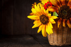 Sunflowers in basket Royalty Free Stock Image