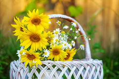 Sunflowers in basket Stock Photo