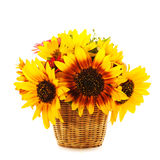 Sunflowers in basket isolated Stock Photo