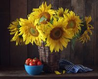 Sunflowers in a basket and tomatoes on the table. stock photography