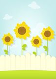 Sunflowers behind fence Royalty Free Stock Photo